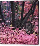 A Pink Autumn  Canvas Print