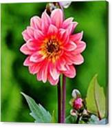 A Pink Flower Canvas Print