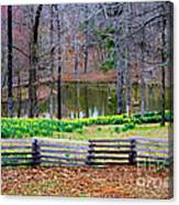 A Place Of Peace Among The Daffodils Canvas Print