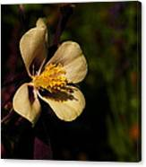 A Pretty Flower In The Sun Canvas Print