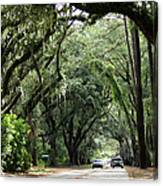 A Pretty Tree Covered Road Somewhere On Hilton Head Island Canvas Print