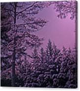 A Quiet Snowy Night Canvas Print