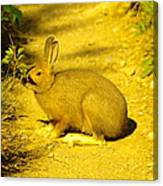 A Rabbit In My Path Canvas Print