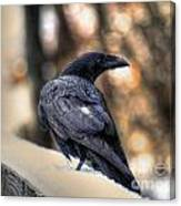 A Raven In Winter Canvas Print