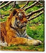 A Real Detroit Tiger Canvas Print