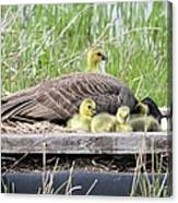 A Real Mother Goose Canvas Print