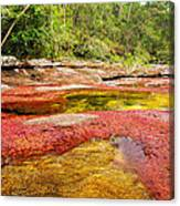 A Red And Yellow River In Colombia Canvas Print