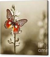 A Red Butterfly On The Moody Field Canvas Print