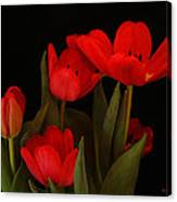 A Red Tulip Day Canvas Print