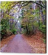 A Road In Autumn. Canvas Print