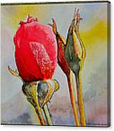 A Rose Awaitingtwo More Roses Canvas Print