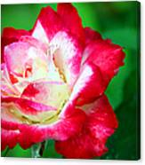 A rose by any other name would smell as sweet Photograph by Elizabeth Winter