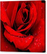 A Rose For A Sweetheart Canvas Print