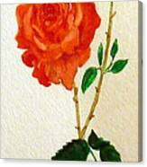 A Rose For Rosa Canvas Print