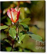 A Rose For You Canvas Print
