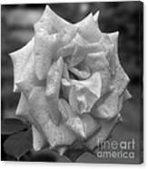 A Rose In Black And White Canvas Print