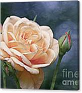 A Rose Is A Rose... Canvas Print