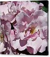 A Rose Named Blueberry Hill  Canvas Print