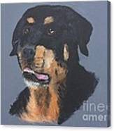 A Rottie Named Thor Canvas Print