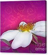 A Royal Rose Canvas Print