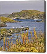 A Safe Harbor In Newfoundland Canvas Print
