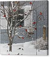 A Sea Of Cardinals At The Feeder Canvas Print