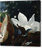 A Sea Of Magnolias Canvas Print