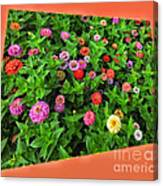 A Sea Of Zinnias 06 Canvas Print