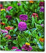 A Sea Of Zinnias 14 Canvas Print
