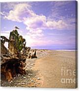 A Seagull On The Dungeness Spit Canvas Print