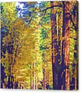 A Shady Drive Through Yosemite Canvas Print