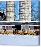 A Sheepish Winter's Day Canvas Print