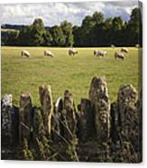 A Sheep's Field Canvas Print