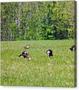 A Shot Of Wild Turkey Canvas Print