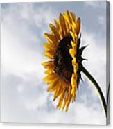 A Side Of Sunflower Canvas Print