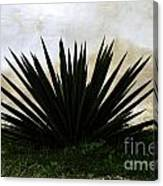 A Simple Yucca Canvas Print