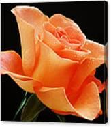 A Single Bloom 1 Canvas Print