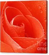 A Single Bloom 3 Canvas Print
