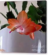 A Single Blossom Canvas Print