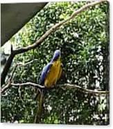 A Single Macaw Bird On A Branch Inside The Jurong Bird Park Canvas Print