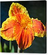 A Single Orange Lily Canvas Print