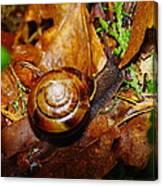 A Slow Snail Canvas Print