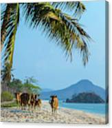 A Small Herd Of Cows Canvas Print