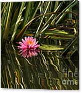 A Small Summer Treat Canvas Print