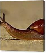 A Snails Pace Canvas Print