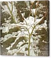 A Snowy Tree Canvas Print