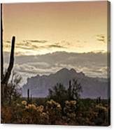 A Sonoran Morning  Canvas Print