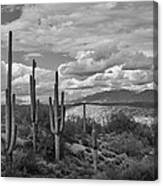 A Sonoran Winter Day In Black And White  Canvas Print