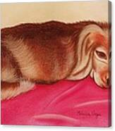 A Spaniel's Nap Canvas Print