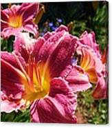 A Splash Of Lilies Canvas Print